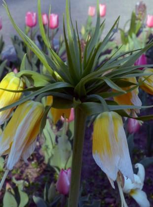 Blumen im Donaupark